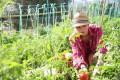 bando concorso giardiniere Comune Camogli